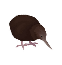 Detailed flat icon of kiwi bird wild vector