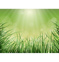 grass rays and glare vector image