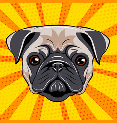 pug dog face dog portait vector image vector image