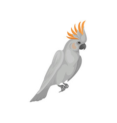 cute white cockatoo with bright orange crest vector image