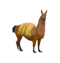 Llama carrying heavy load vector