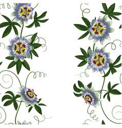 passiflora seamless border vector image