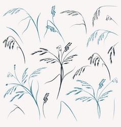 Set elegant field glass plants for design vector