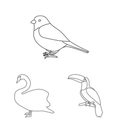 types of birds outline icons in set collection for vector image