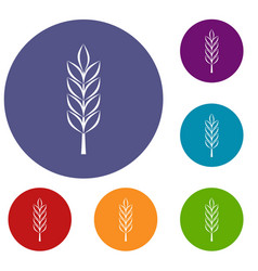 Wheat spike icons set vector