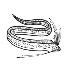 Giant oarfish sketch engraving vector