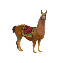 Llama with a blanket vector