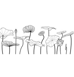 Lotus sketch drawn on a white background vector