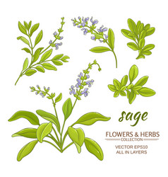 sage set vector image