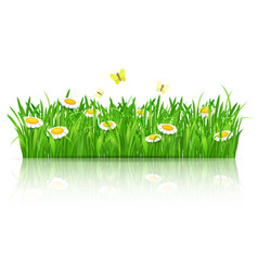 summer field of flowers with butterflies vector image