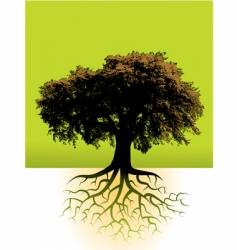 trees roots vector image vector image