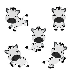 Collection of little funny zebras children vector