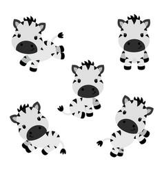 Collection of little funny zebras children vector