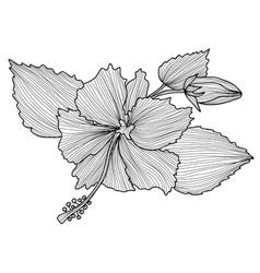 decorative hibiscus vector image