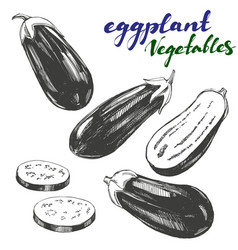 eggplant vegetable set hand drawn vector image