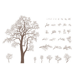 set branches and tree vector image