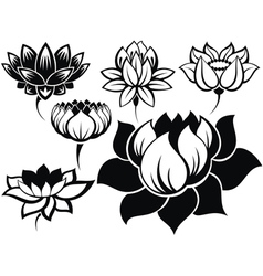 Set of lotuses vector image