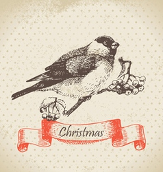 Christmas bullfinch and ashberry vector image vector image