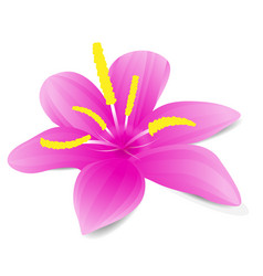 Flowerpink flower with shadow on white background vector