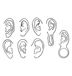 set of different ears vector image
