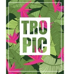 Tropical Background with Lettering vector image