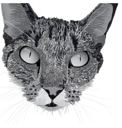 head of a cat vector image vector image