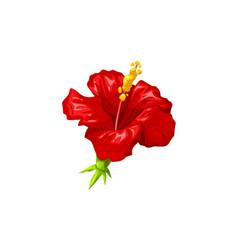 Hibiscus flower tropical plant herbal tea vector