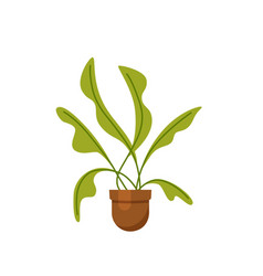 House plant isolated flat house plant pot vector