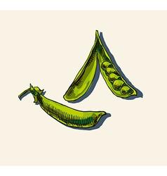 Peas in a pod sketch vector