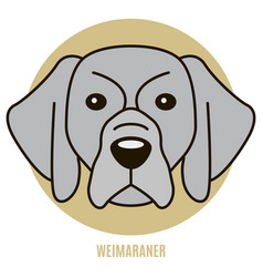 Portrait of weimaraner vector