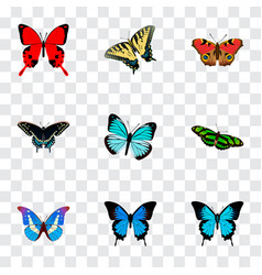 Set of butterfly realistic symbols with morpho vector