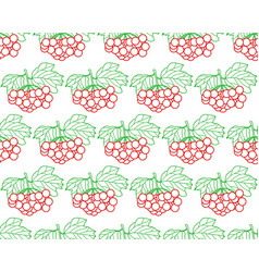arrowwood fruits contour pattern vector image
