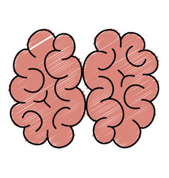 Human brain isolated icon vector