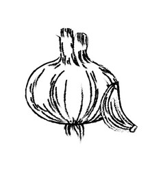 Figure fresh garlic natural vegetable nutrition vector