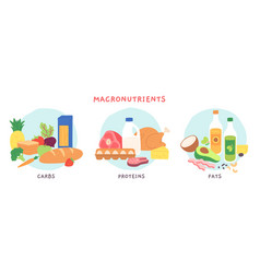 Food macronutrients fat carbohydrate and protein vector