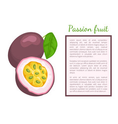 passionfruit with leaf exotic juicy fruit vector image
