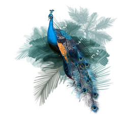 realistic peacock bird with green palms vector image