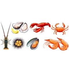 Set of fresh seafood vector image