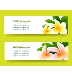 bannner with frangipani floral background vector image