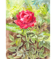 Beautiful watercolor rose on the garden background vector