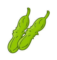 cucumber isolated vector image
