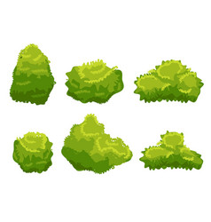 garden bush isolated shrub hedge green vector image