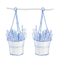 lavender in pots on white vector image