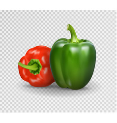realistic of sweet pepper 3d vector image