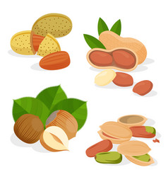 set icons nuts and seeds vector image