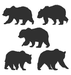 set wild grizzly bear silhouettes isolated on vector image