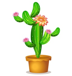 A pot with a flowering cactus plant vector image