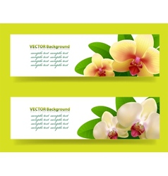 banner with orchids floral background vector image