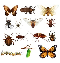 Different kind of wild insects vector