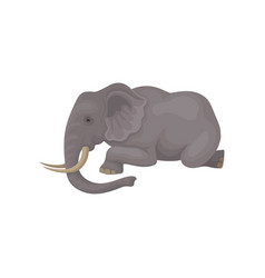 flat icon of big gray elephant lying vector image